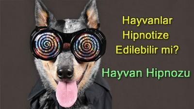 hayvan hipnozu